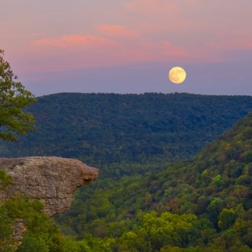 Whitaker Point by William Dark