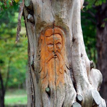 Clysta Willett Nature Trail — A Walk in the Park